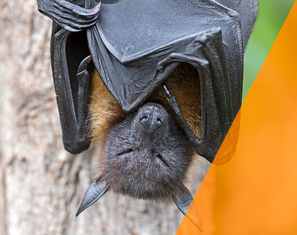 Four things bats can teach us about survival