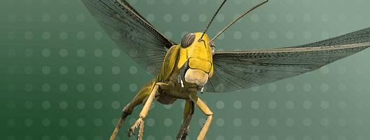 3D image of a locust